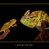 give-me-five-dad