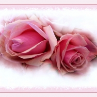 roses-are-pink