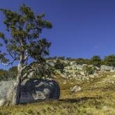 Tenterfield Landscape by Robert Moore (AB Grade) MERIT