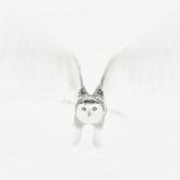 Snowy Owl Canada by Bernice Fargus (A Grade) MERIT