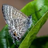 Cycad Moth on a Leaf by Rhonda Ramadge (A Grade) HONOUR