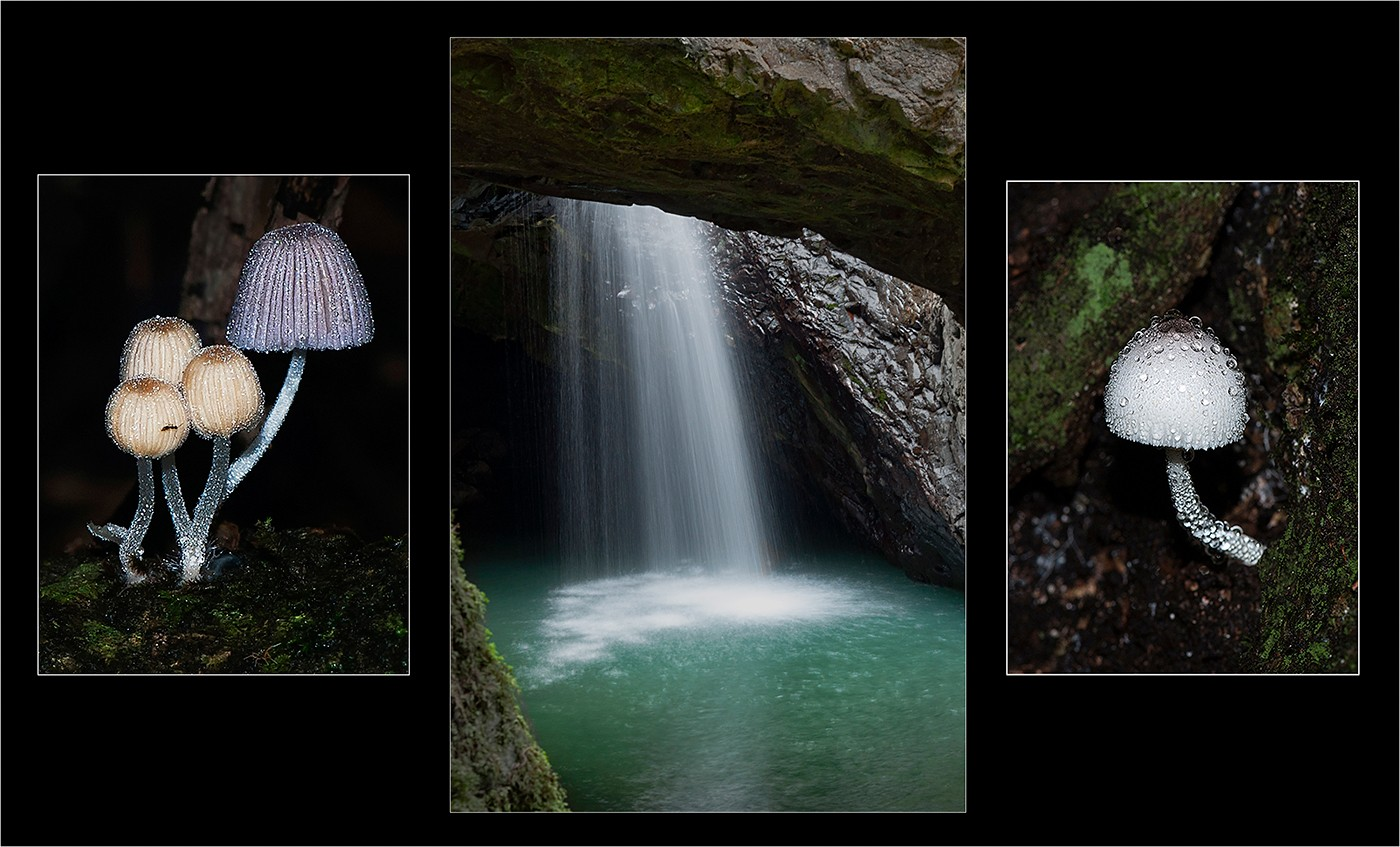 FIRST PLACE </BR>Natural arch fungi </br>by Carol Robinson (A Grade )