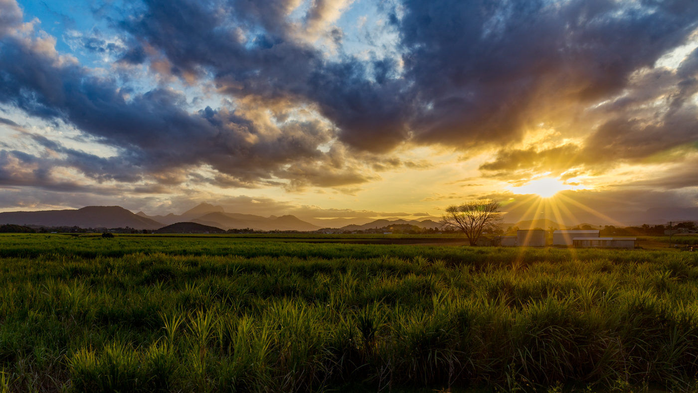 Sugar Cane Valley </br>by Greg McMillan </br>(B Grade) – HONOUR