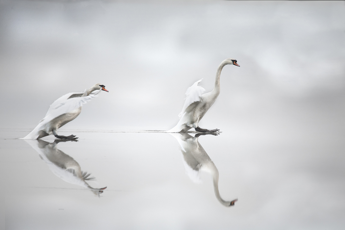 Icy Reflection by David Scott (A Grade) - HONOUR